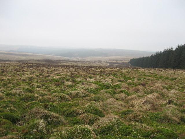 Burngrange Moor