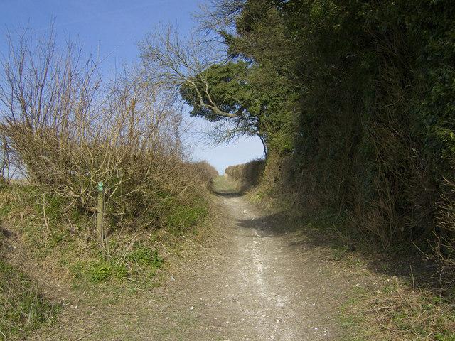 Cheriton Lane looking towards Upper Lamborough Lane - Cheriton