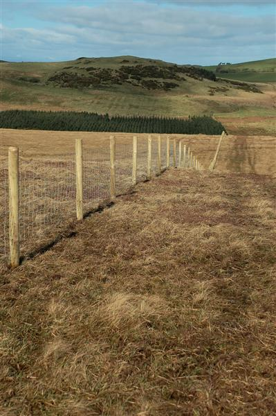 New Fence On Littleton Hill