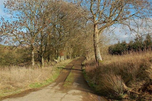 Leaving Letterpin Woods