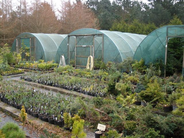 Kenwith conifer tree nursery