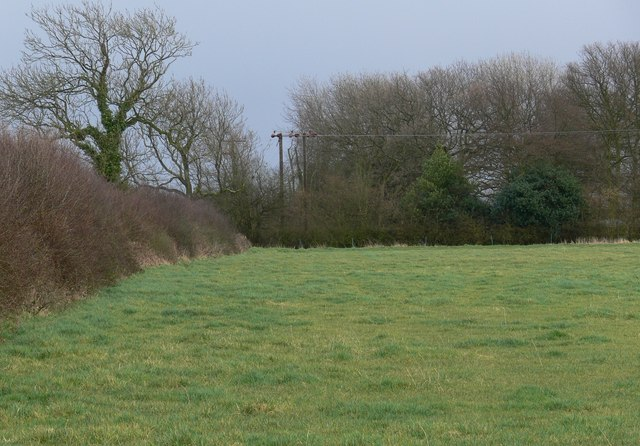 Field and trees near New Hayes Farm