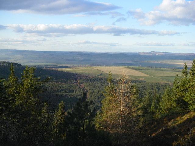 View of Thrunton Wood from Thrunton Crag
