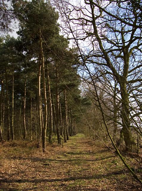 Black Plantation, Holme Common