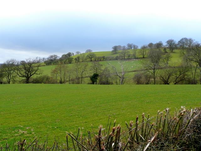 Pastoral slopes of Mynydd y Bryn