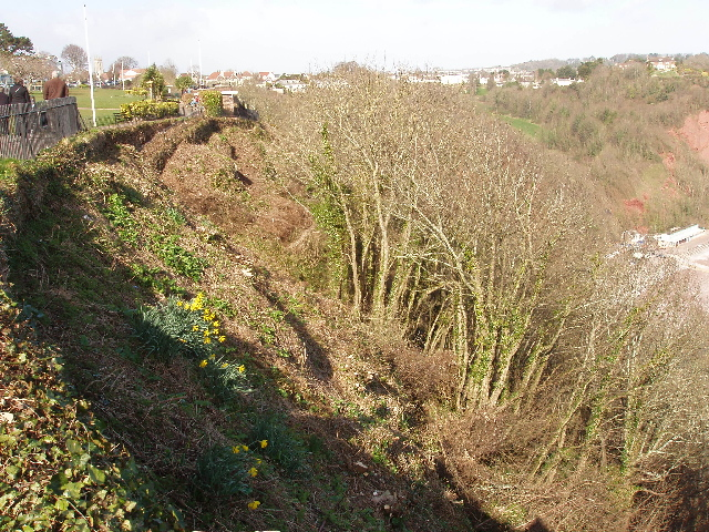 Tree clearance below Babbacombe Downs
