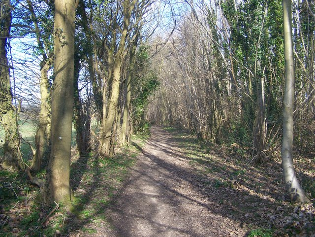Wealdway in Shipbourne Forest