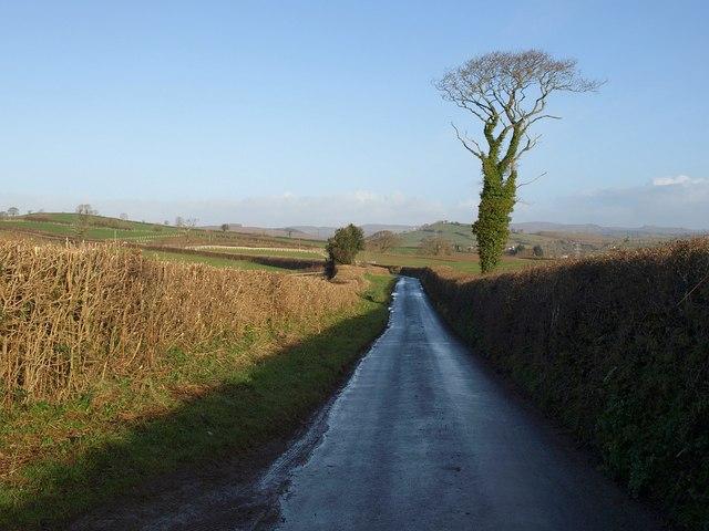 Lane to Waddon Cross
