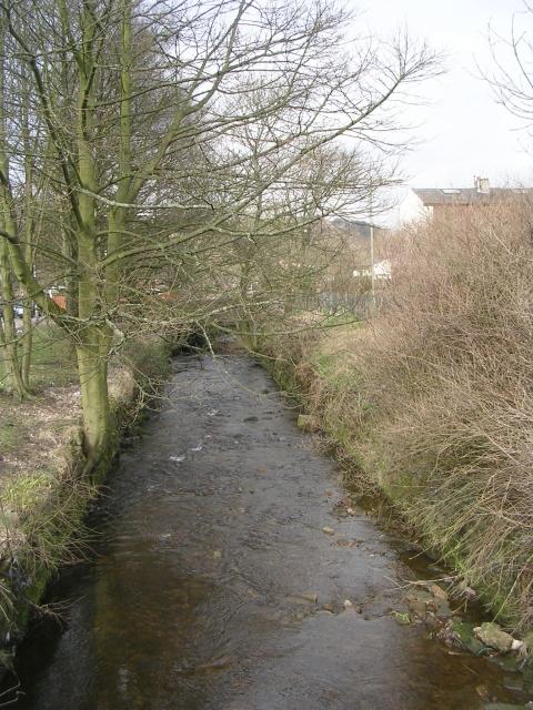 Stream - Lacy Avenue