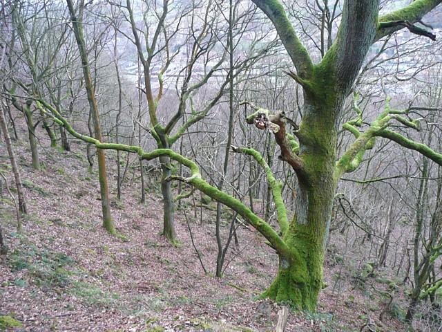 Hathershelf Scout Wood, Mytholmroyd
