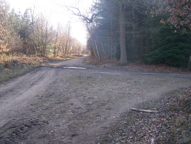 Footpath junction in Mereworth Woods
