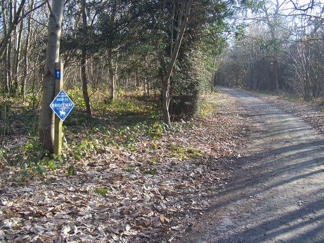 Bridleway in Mereworth Woods