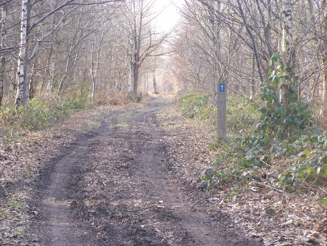 Bridleway in Mereworth Woods