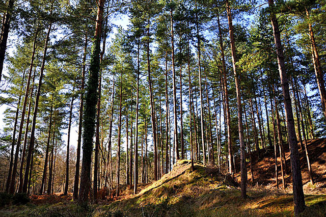Strange mound in the woods