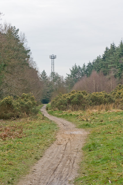 Mobile phone mast in Lord's Wood