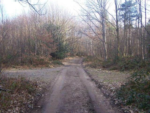 Bridleway in Roadside Wood