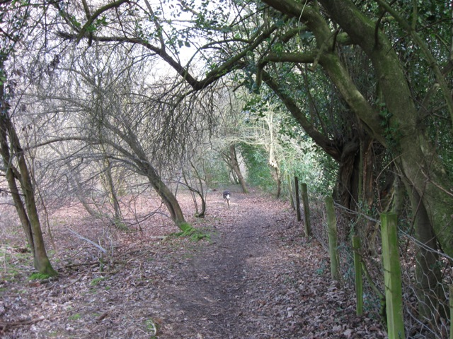 Footpath to Cholesbury Camp from Shire Lane