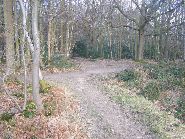 Bridleway junction in Great Leybourne Wood