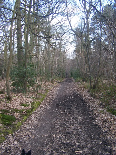The Lord's Walk in Great Leybourne Wood