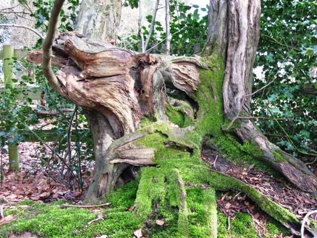 A Twisted Stump