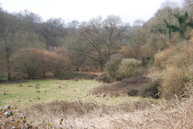 The valley of the Oakshott Stream