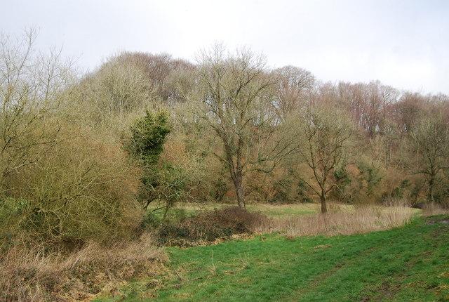 Woodland in the Oakshott Stream valley