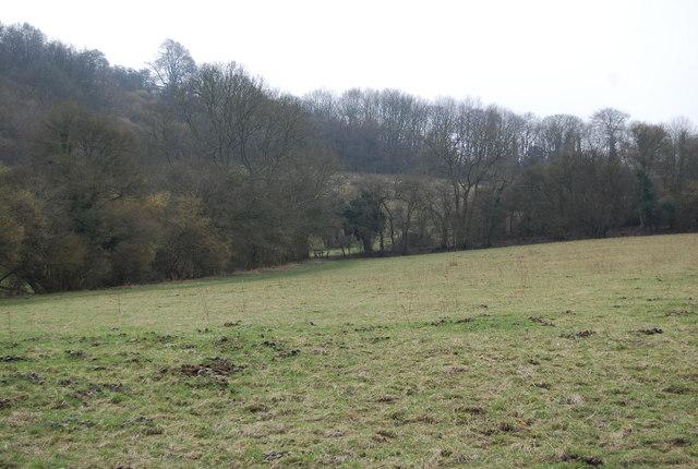 Large field south of Lower Oakshott