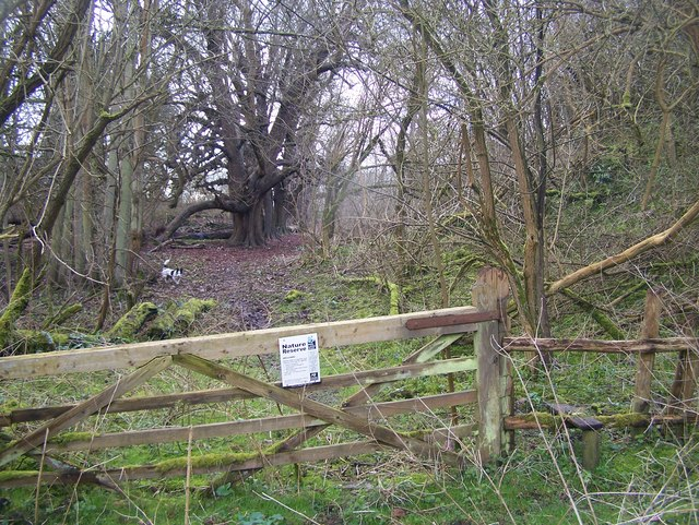 Quarry Wood Nature Reserve