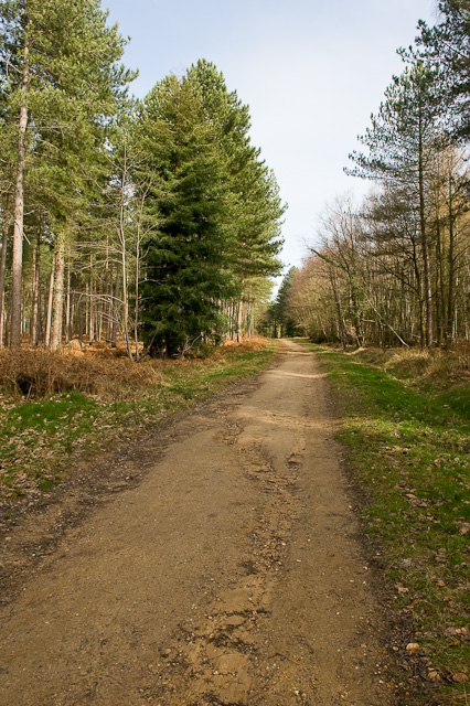 Bridleway in Lord's Wood