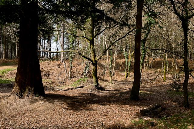 Small escarpment in Lord's Wood