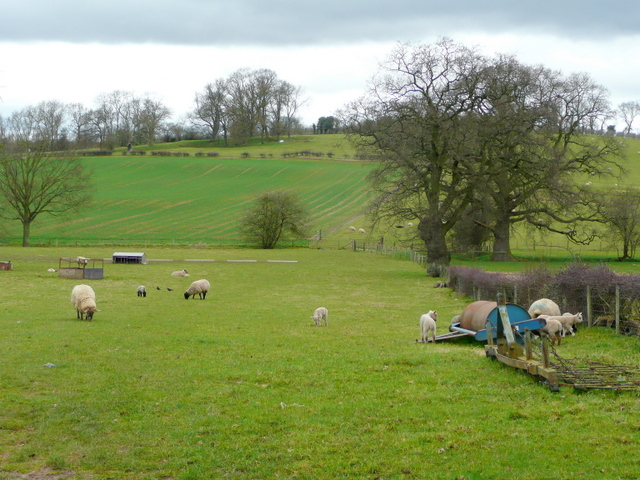 Sheep pasture opposite Carswalls Manor