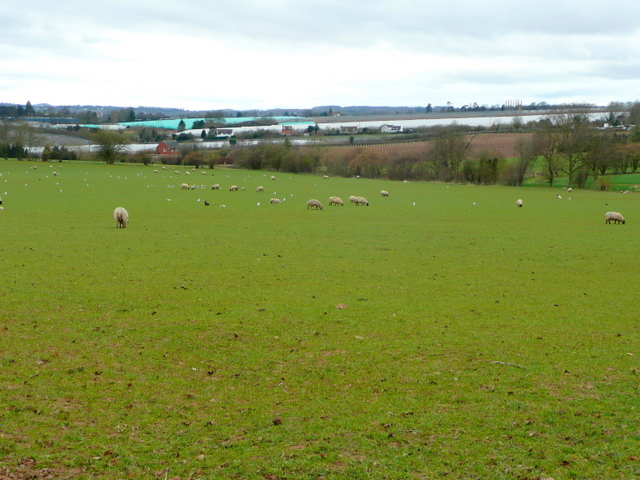 Pasture and polytunnel