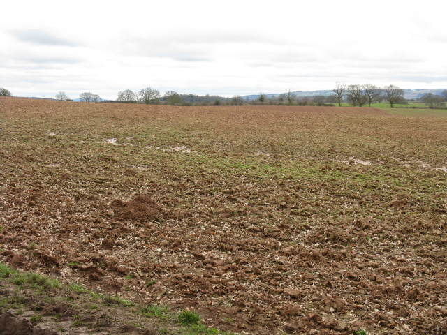 Muddy Field at Bromtree's Hall