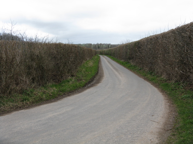 Lane Through The Orchards