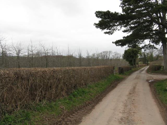 Lane Near Lower Hopton Farm