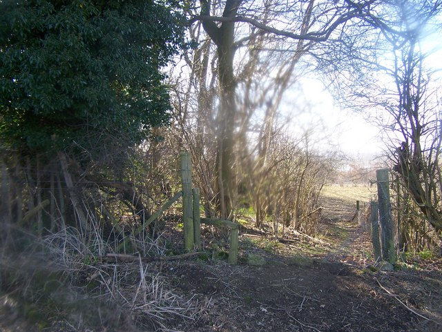 Footpath past Peckham Fields Wood
