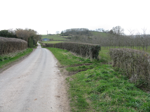 Lane To Bodenham Moor
