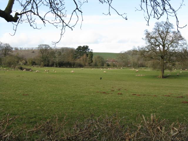 Fields Of Ullingswick