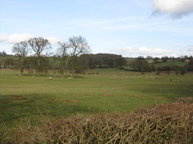 Sheep Near Ullingswick