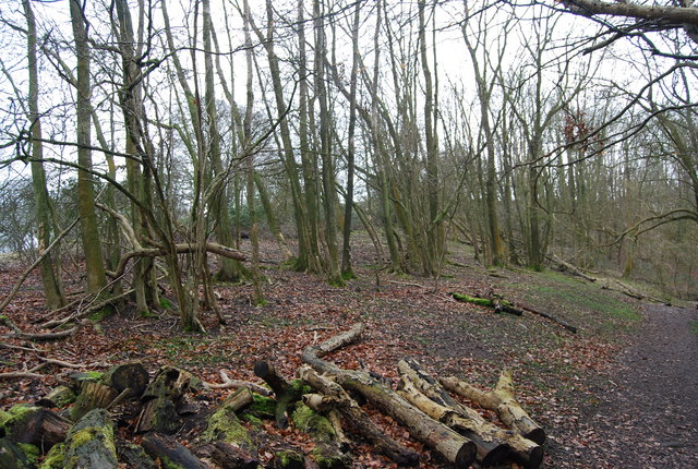 Coppiced woodland by the Hangers Way, Oakshott Hanger