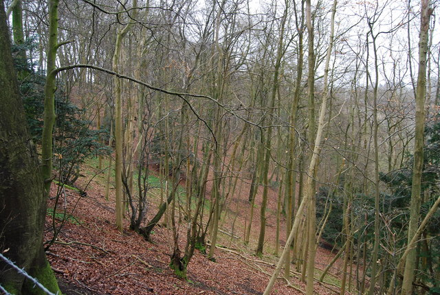 Looking down the wooded slope of Oakshott Hanger