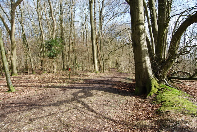 Footpath through the woods, Ashford Hanger