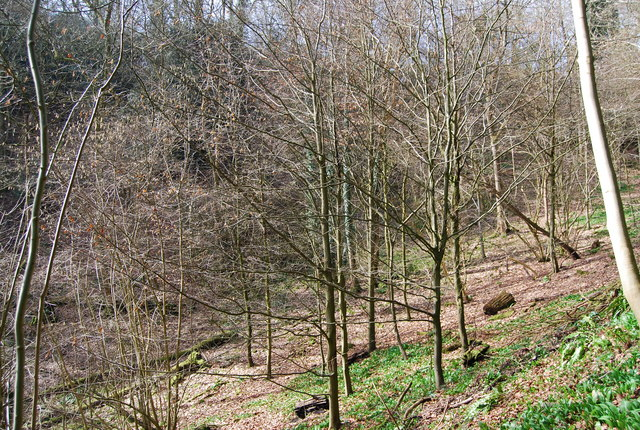 Woodland, Lutcombe Bottom
