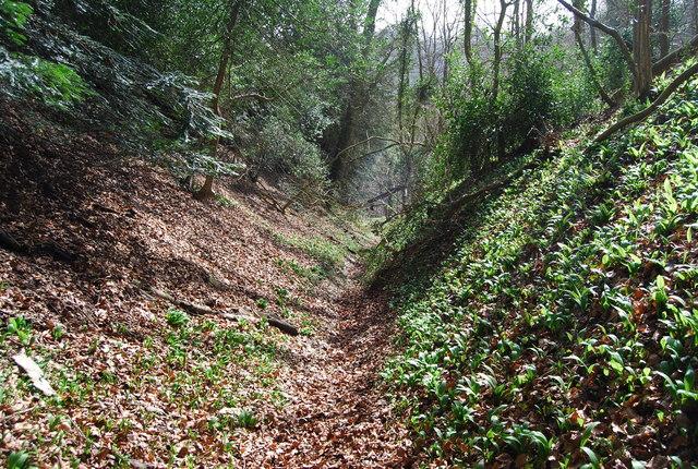 Sunken Lane, Ashford Hill