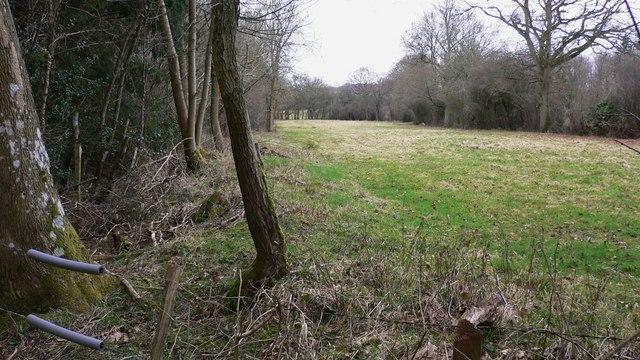 Narrow pasture alongside Taylors Copse