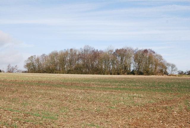Woodland on the Horizon