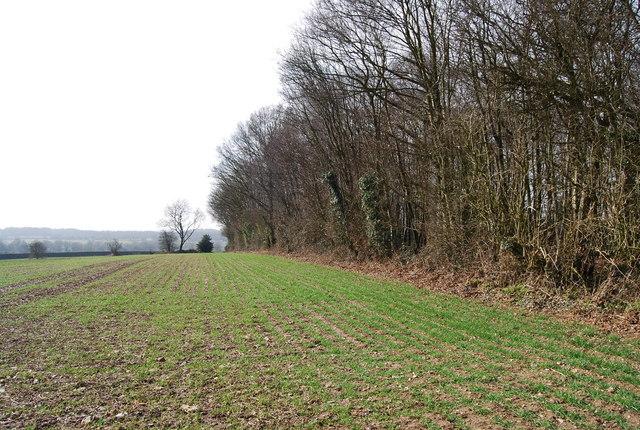 Field, Woodland border
