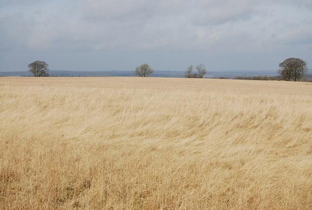 A Hay field near Warren Corner