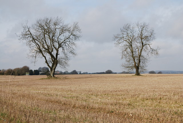 Two trees in a stubble field