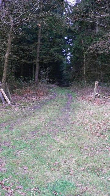 Track through wood near Slathurst Farm